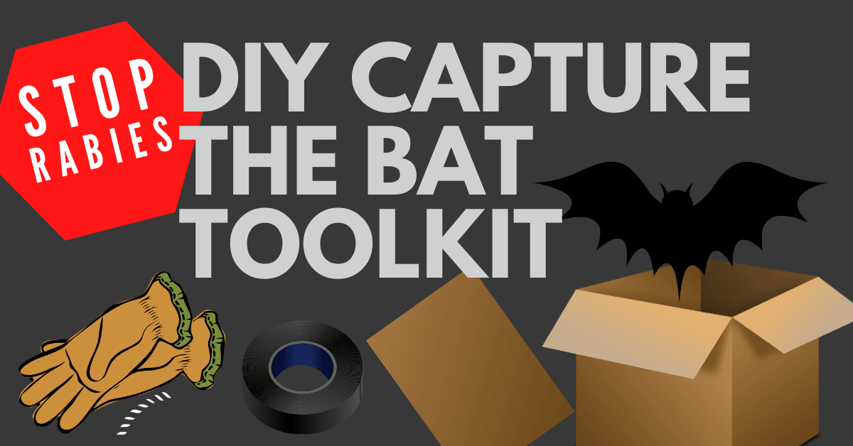 Capture the Bat DIY Toolkit