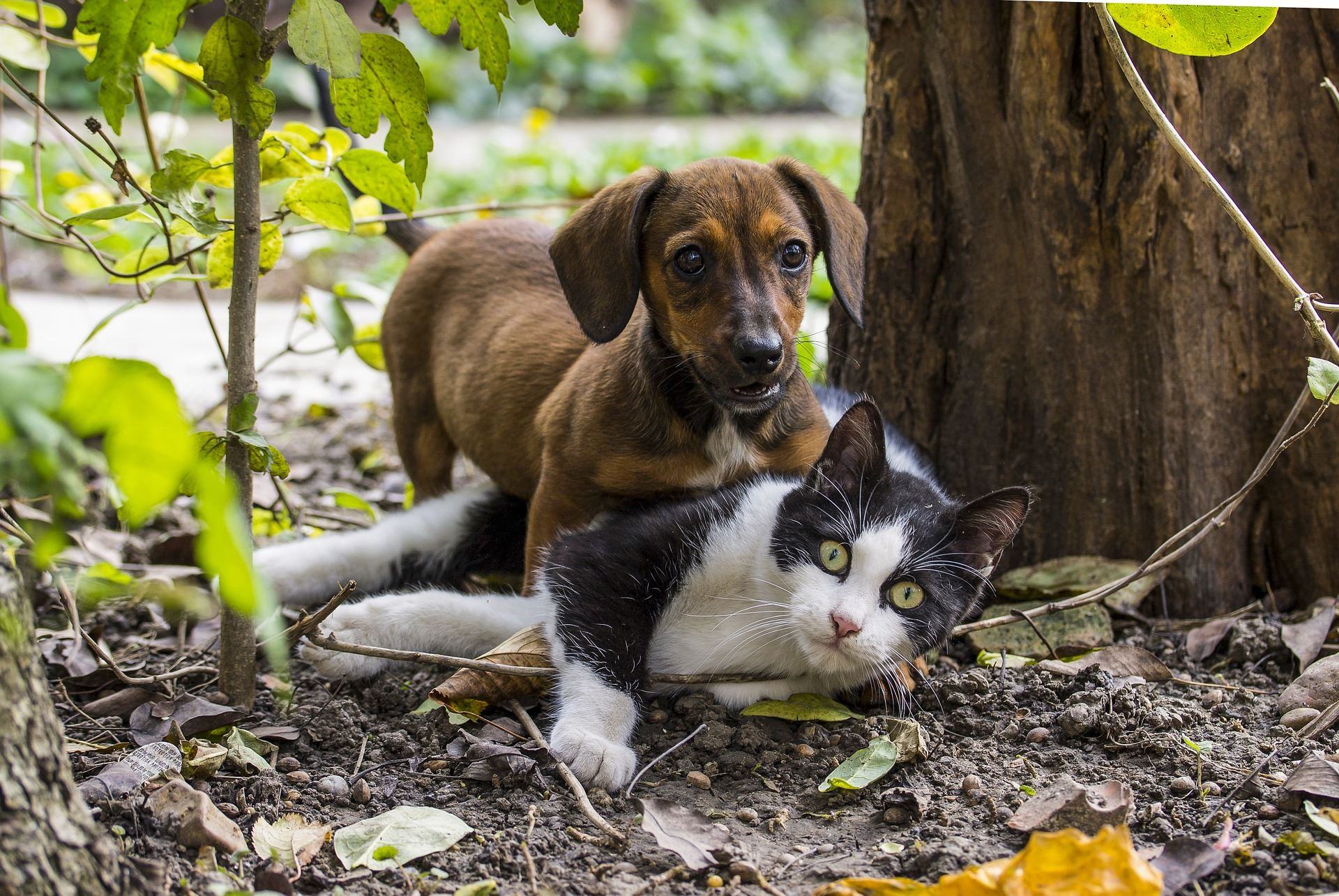 Cat and dog playing outside under a tree